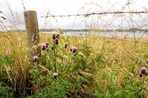 Wildflowers of Lewis